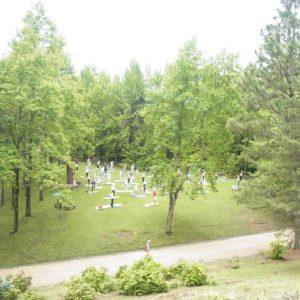 森林浴ヨガ